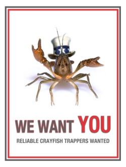 crayfish trappers wanted postcard